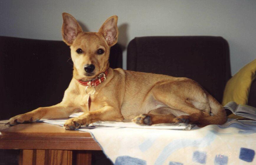 Boni the SETI Dog